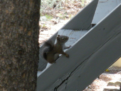 Squirrel 8-31-08.JPG