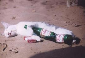 Drunk cat1.JPG