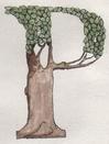 Letter_P_Tree[1].JPG