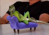 Thumbnail image for Lizzard chillin.jpg