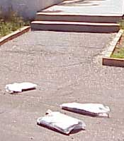 newspapers_on_driveway_sm.jpg