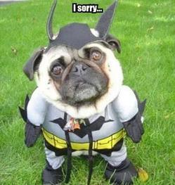 Sorry pug12.jpg