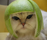 cat helmet.jpg