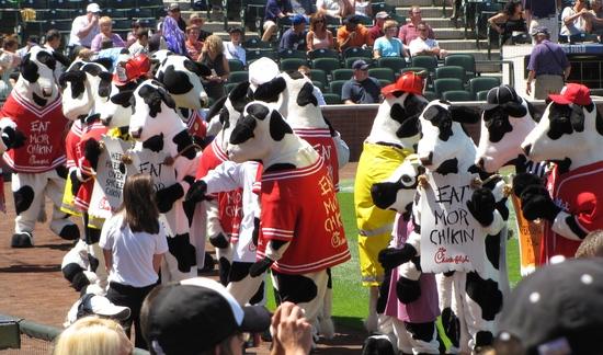 Dancing cows 8-15-10-1.jpg