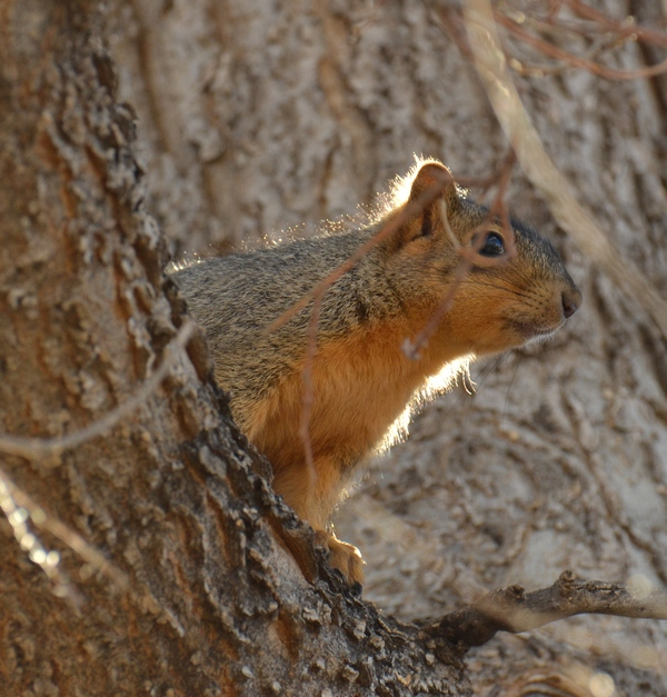 rally squirrel 12-30-12
