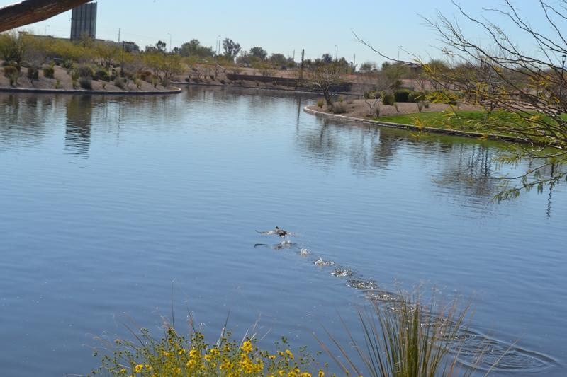cb pond
